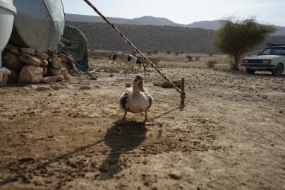 Bij de nomaden