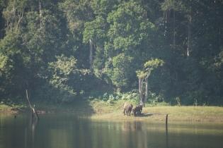 Periyar Tiger Reserve